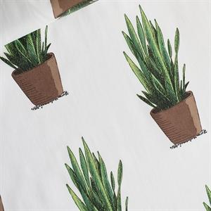 Picture of Sansevieria - Coton Linon - Blanc Cassé